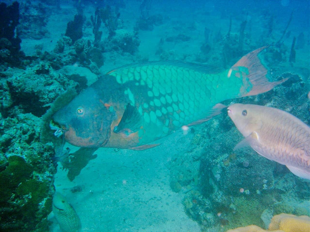 Cozumel Glass Bottom Tour Fish Bahamas Cruise Excursions