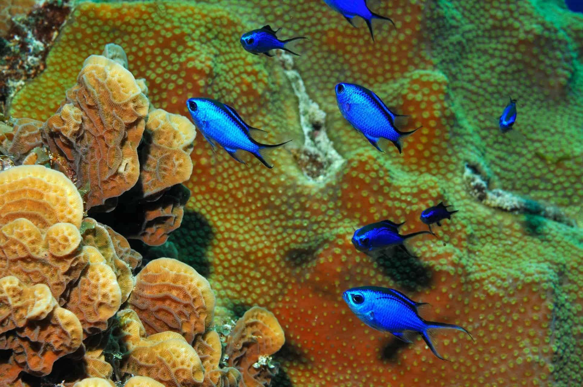 Cozumel Palancar Reef 2 Bahamas Cruise Excursions