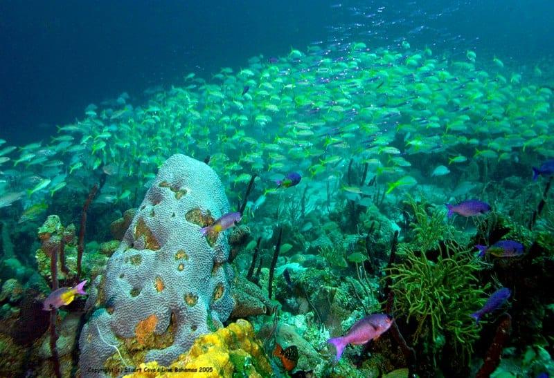 Discover Diver Nassau