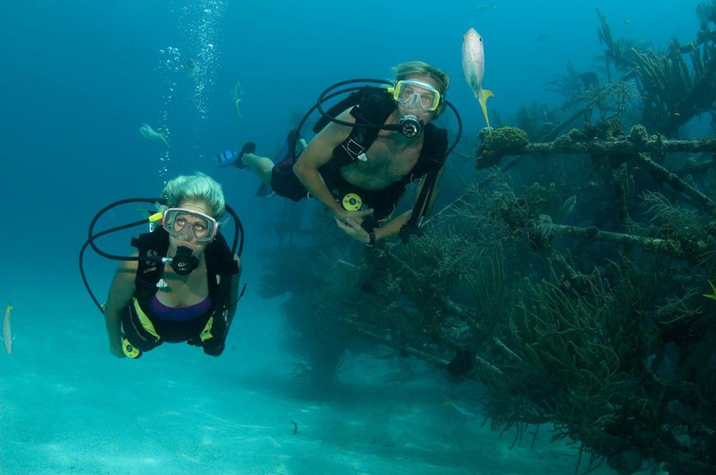 Wateradventures snuba fish