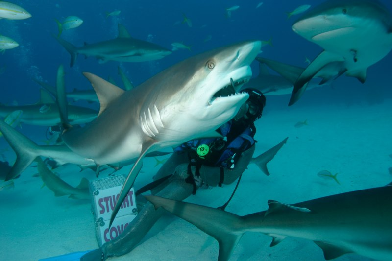Nassau Shark Scuba Diving Adventure