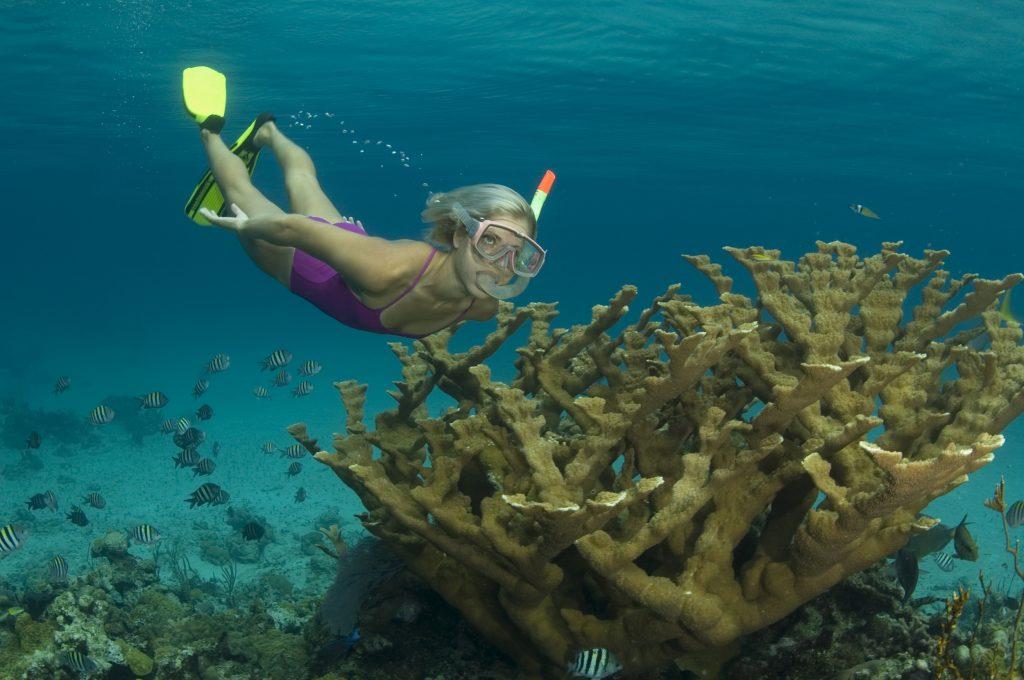 Reef Tours Bahamas