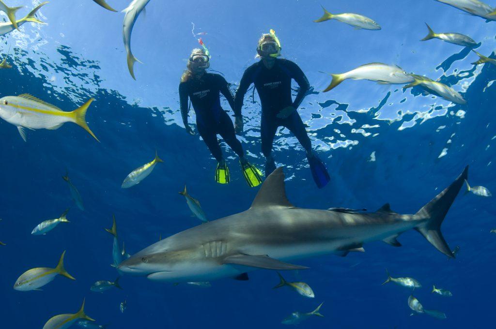 Nassau Ultimate Snorkeling Adventure Bahamas Cruise