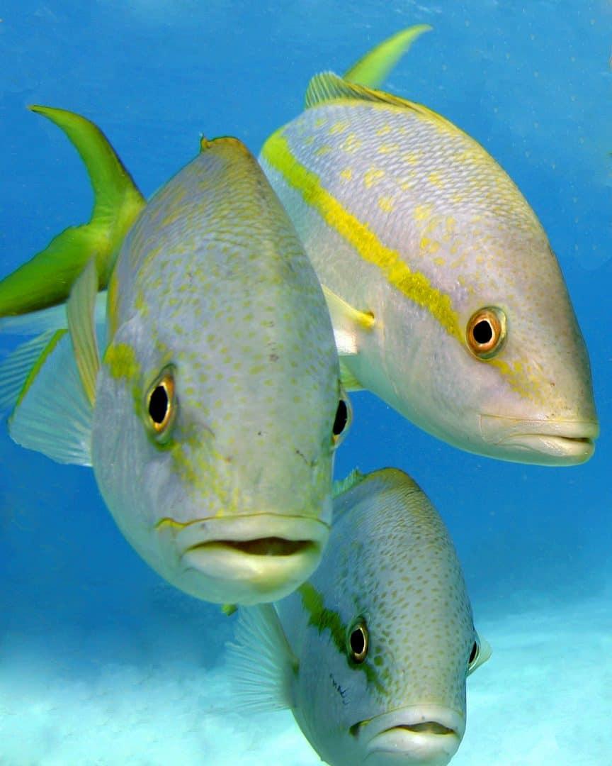 Nassau Ultimate Snorkeling Sealife Bahamas Cruise